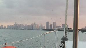 Part of Miami skyline. Notice all the gulls.