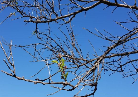 travel photographer greece blossom