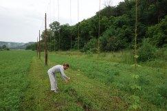 2014: Training the hops