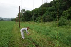 2014: Training the hops