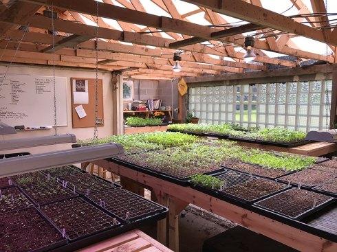 Greenhouse Week 12