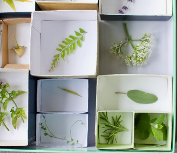 DIY discovery box: A no-cost DIY activity that encourages your toddles to examine natural objects