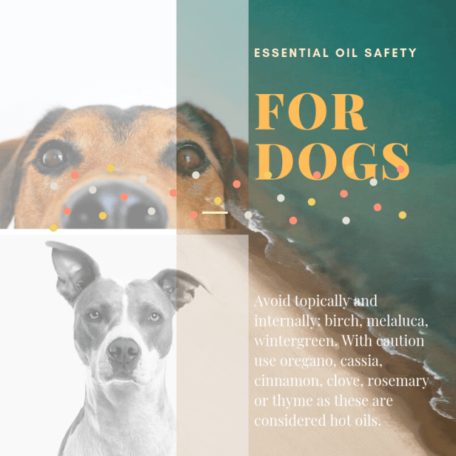 Essential Oil Safety for Dogs