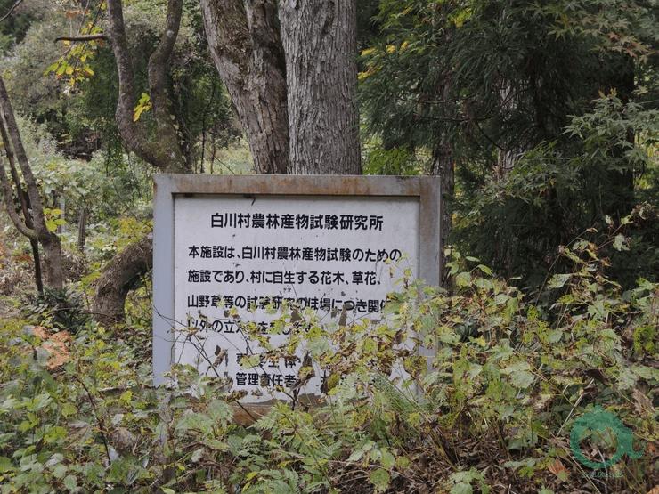 白川鄉合掌村一日遊