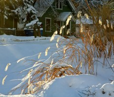 Grasses in the Light, January