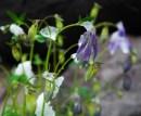 Purple Flower with Snow