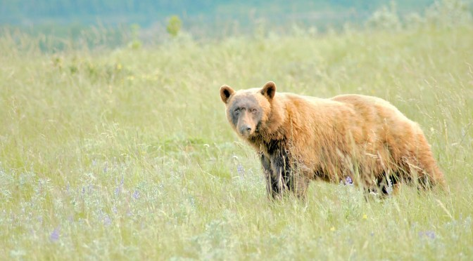 For the Love of Bears – A Gallery of Photos