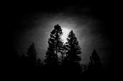 Full Moon over Tall Trees