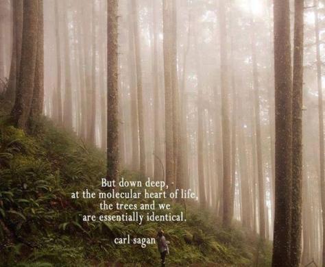 Carl Sagon - trees