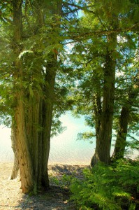 Cedars-Lake-McDonald-199x300