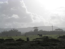 Half Moon Bay Horse & Sky