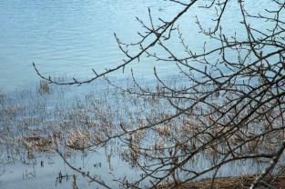 Spring Branches, Lake