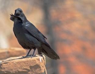 Bryce, Raven 2