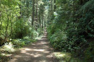 San Juan Island Trail Walk in the Forest