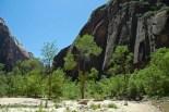 Zion, Green Trees, Black Rocks