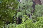 Zion, Vibrant Greens