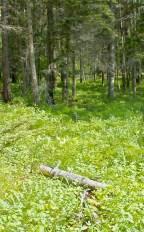 Foresst Greens (2)