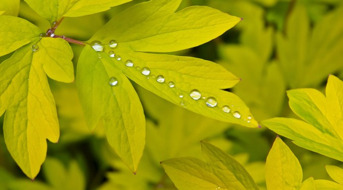 Sparkling Diamond Rain Drops – A Gallery of Photos