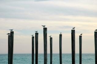 Birds on a Pier, Destin