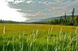 Pasture, Back Road, Grasses