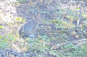 Rabbit2, Trail of the Cedars