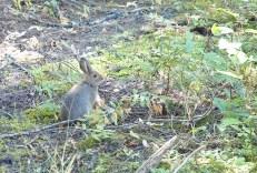 Rabbitt, Trail of the Cedars