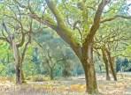 The Preserve, Trees3