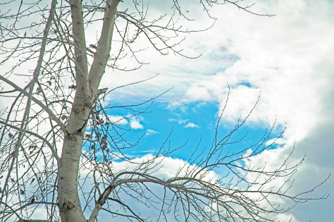 Bare Tree, Sky, Clouds, Blue Patch