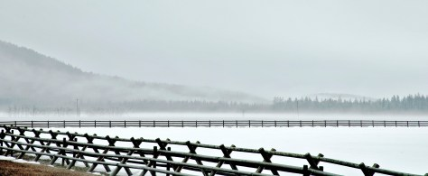 Fog, Fenceline, Snow
