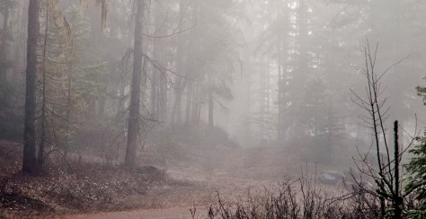 Forest, Fog, Home