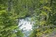 Greenery Surrounds Waterfall, Glacier National Park
