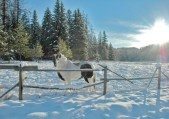 Horse in Pasture, Snow & Sun Slants