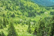 Bear Grass, Mountain, GreensRS