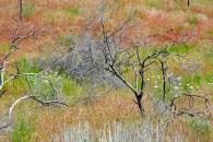 Oregon, Wildlife Refuge, Grasses, Lunch Stop