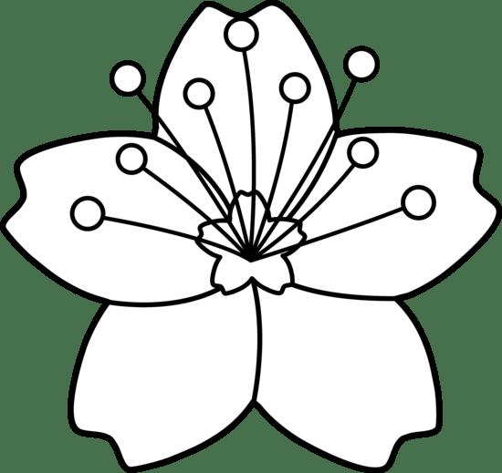 cherry blossom line art free clip art