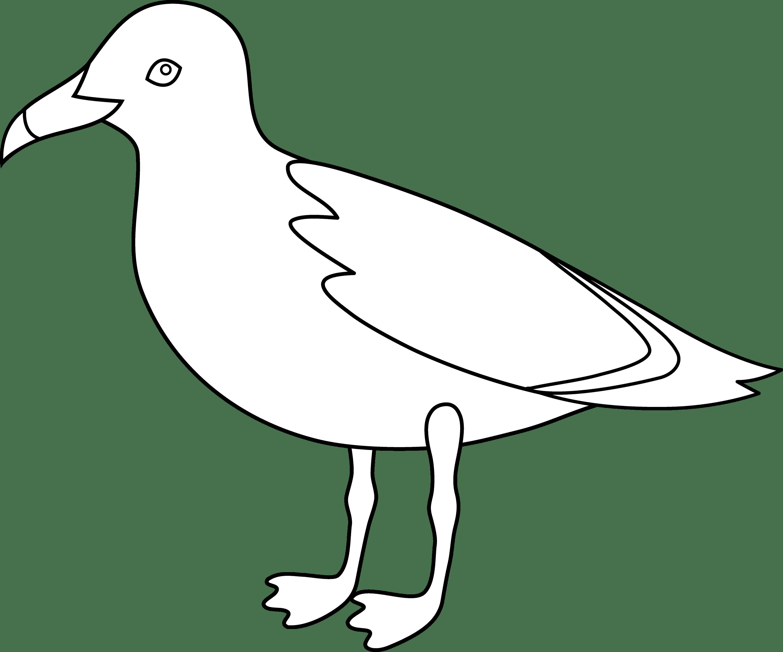 Seagull Line Art
