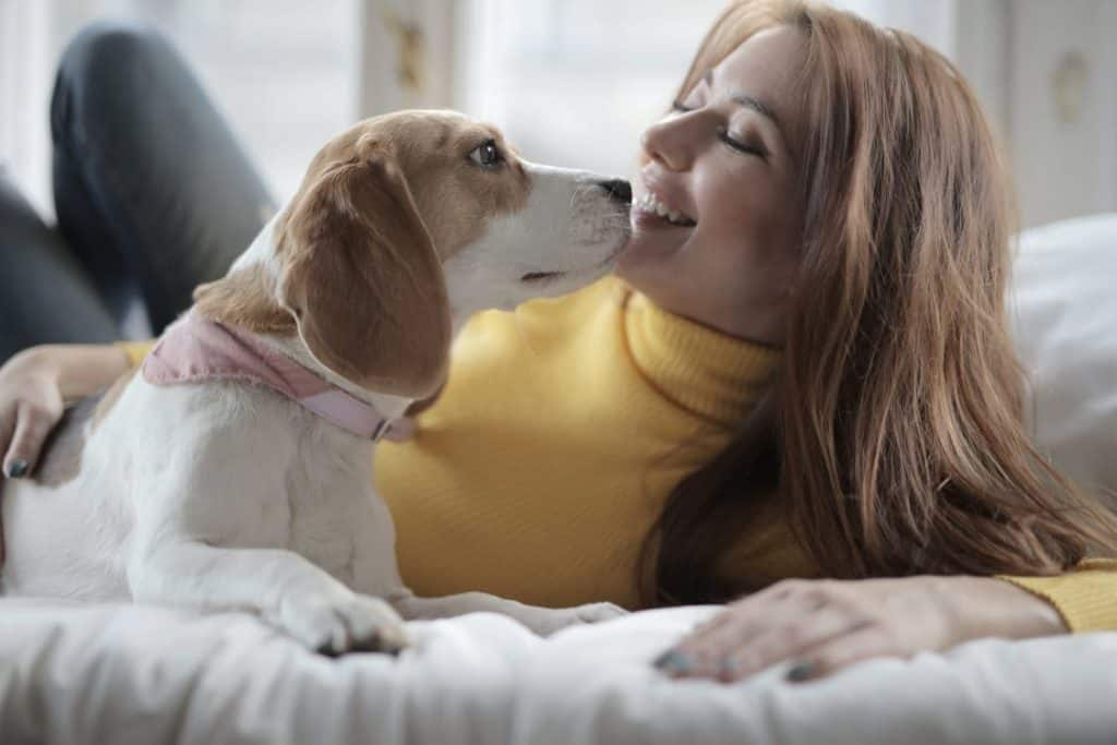 happy dog with owner