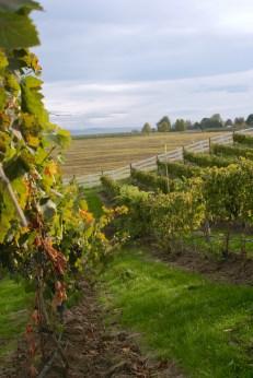 Dayal Estate Vineyard in Walla Walla.