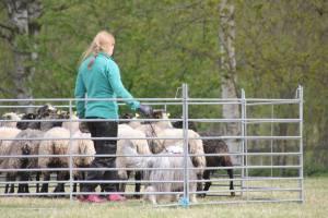 Emma och Ebba jobbar i fålla