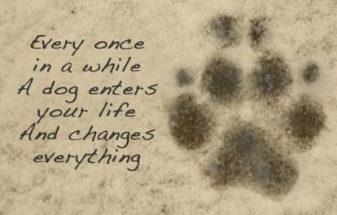 dog-enters-your-life-quote-lovely-cute-puppy-love-animals-pics-sayings-images