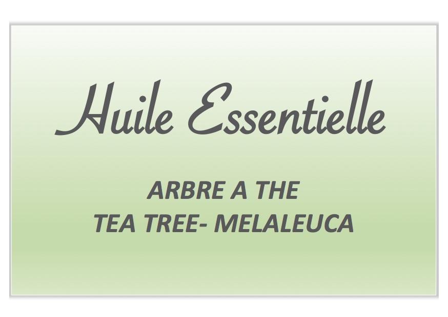 Tea tree / Arbre à thé