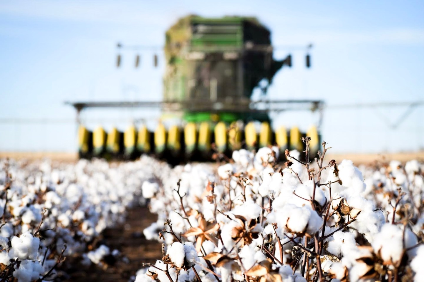 Cotton  Stripping!