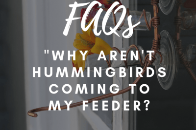 Why Aren't Hummingbirds Coming to My Sweet Feeder? – FAQs