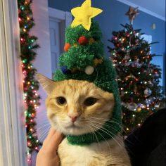 christmaspuds