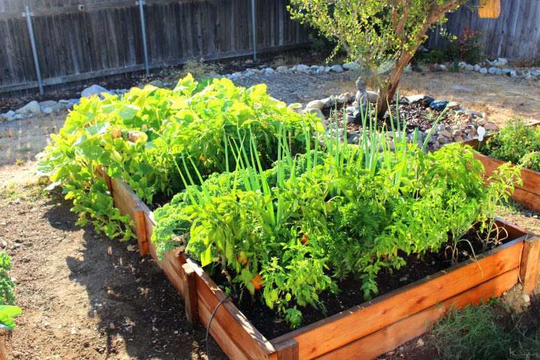 Raised Garden Boxes with Vegetables