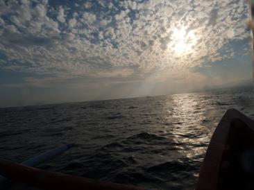 Balade en bateau pour voir les dauphins