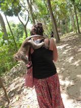 L'attaque du macaque