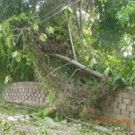 Tree down Ocho Rios Hurricane Sandy