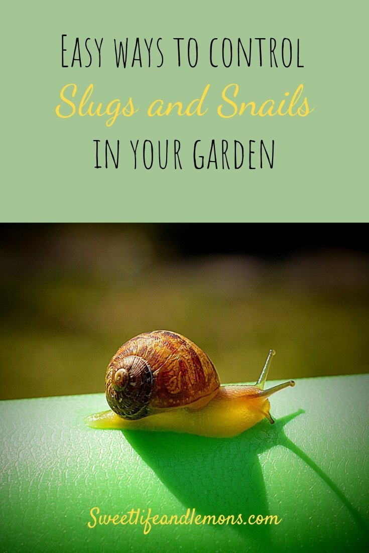 slugs and snails control
