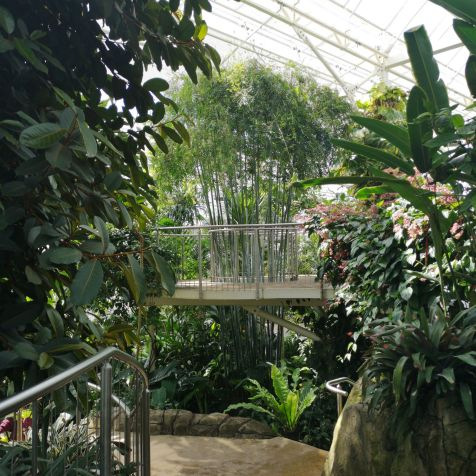 inside glasshouse at RHS Wisley